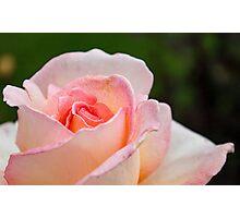 Elegant Soft Pink Rose Photographic Print