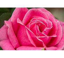 Dark Pink Rose Photographic Print