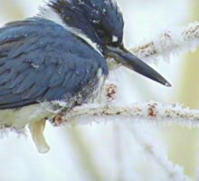 Weathering The Weather...Blue Kingfisher Sticker