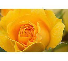 Yellow Rose 2 Photographic Print