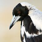Magpie by mncphotography