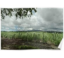 The Mauritius Collection - Bois Cheri Poster