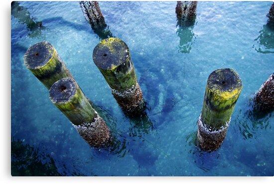 lichen pilings by dedmanshootn