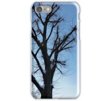 tree and clear sky in winter iPhone Case/Skin