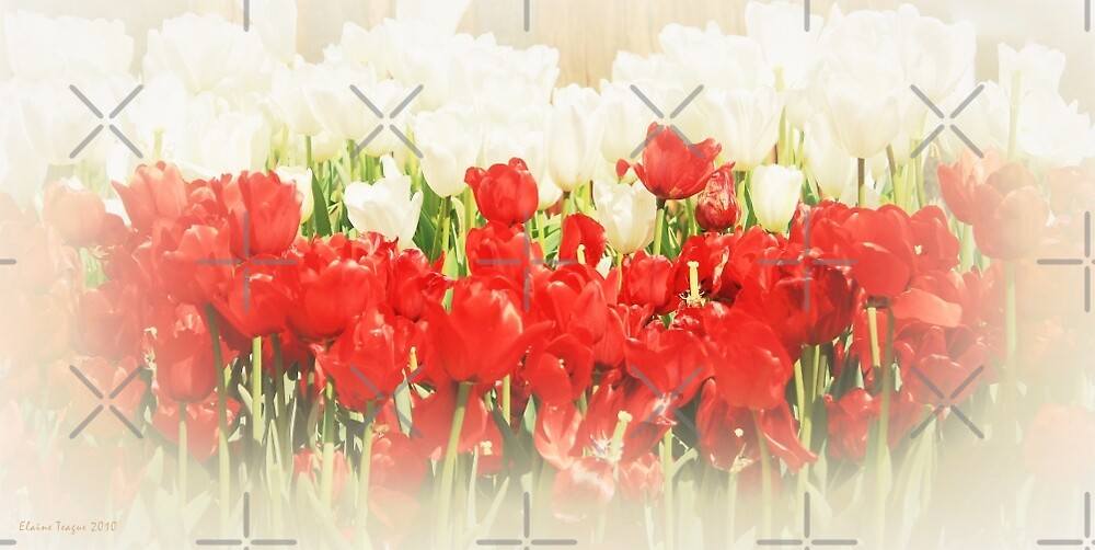 Dreaming Tulips by Elaine Teague