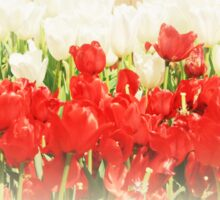 Dreaming Tulips Sticker