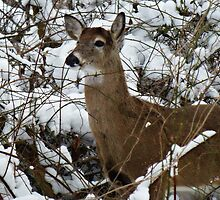 Oh deer, it's cold outside !  by Bine