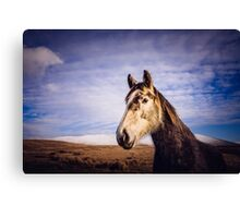 An Irish Horse Canvas Print