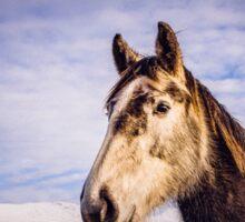 An Irish Horse Sticker
