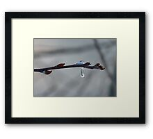 Frozen Dew Drop Framed Print
