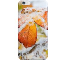 Rose bush frozen autumn color leaves iPhone Case/Skin