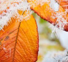Rose bush frozen autumn color leaves Sticker