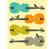 BIRDS ON CELLO STRINGs Photographic Print