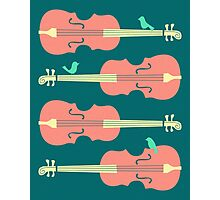 Birds on Cello Strings by Jazzberry Blue Photographic Print