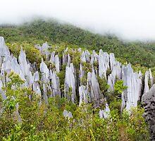 Limestone pinnacles at gunung mulu national park by Juhani Viitanen