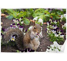 Cute flowerbed squirrel Poster