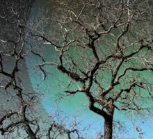 Twistangled - A Sleeping Tree Against The Sky Sticker