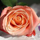 Always A Beauty by vbk70