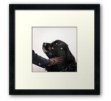 Woman gratify big newfoundland dog, snowy weather Framed Print