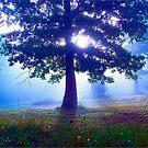 Magic Morning by NatureGreeting Cards ©ccwri