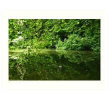 Reflection of Trees on Water Art Print