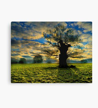Sunrise On A Windsor Oak Canvas Print