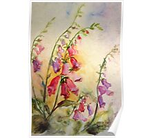 French Foxgloves Poster