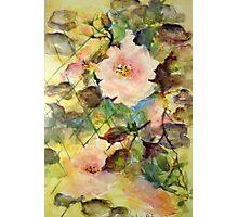 Lattice Roses Photographic Print