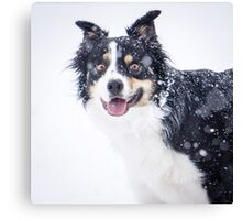 Border Collie in the Snow` Canvas Print