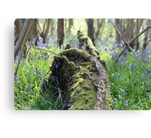Bluebell Woods Canvas Print