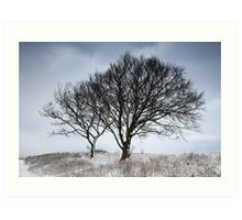 Snow Lined Trees on Bison Hill Art Print