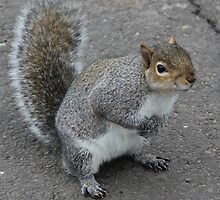 So.... Got Nuts? by Vicki Spindler (VHS Photography)