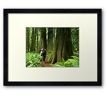 Meeting with a forest giant Framed Print