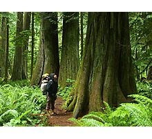 Meeting with a forest giant Photographic Print