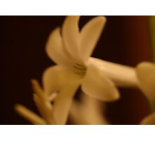 stephanotis in sepia tones by bs hilton Photographic Print