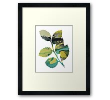 Holly branch Framed Print