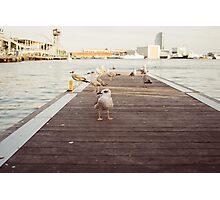 Seagulls On A Jetty Photographic Print