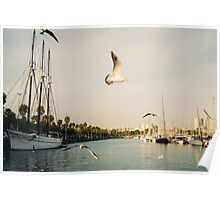 Barcelona Port and Seagulls Poster