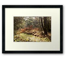 Scenic Walk Framed Print