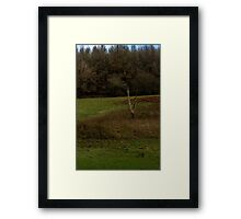 Solitary Tree Framed Print