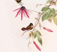 A monograph of the Trochilidæ or family of humming birds by John Gould 1861 V3 034 Lophornis Helenae Sticker