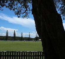 The Shade tree at Yamba Oval by myraj