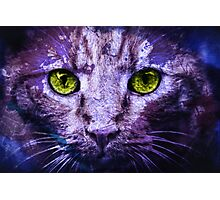 Feral Cat Photographic Print
