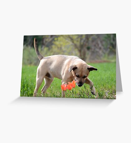 Dogs in Spring Greeting Card