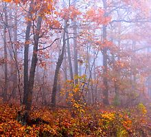 Ozark Tranquility by NatureGreeting Cards ©ccwri