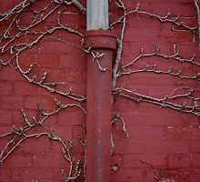 The Red Wall by christine-angst