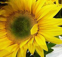 *Sunflower Macro* by EdsMum