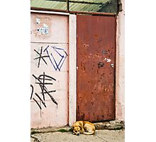 The Dog's Door Photographic Print