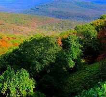 Saddle Canyon N W Arkansas by NatureGreeting Cards ©ccwri