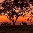 Australiana by Jessy Willemse